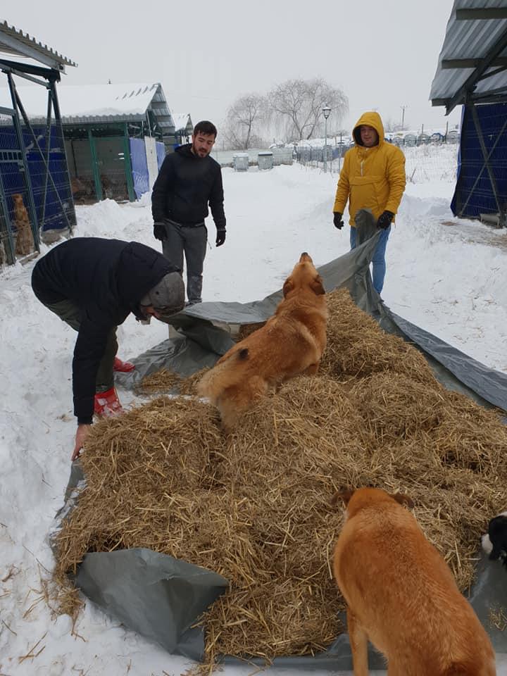 Voluntari la deszăpezit! Adăpostul municipal Iași